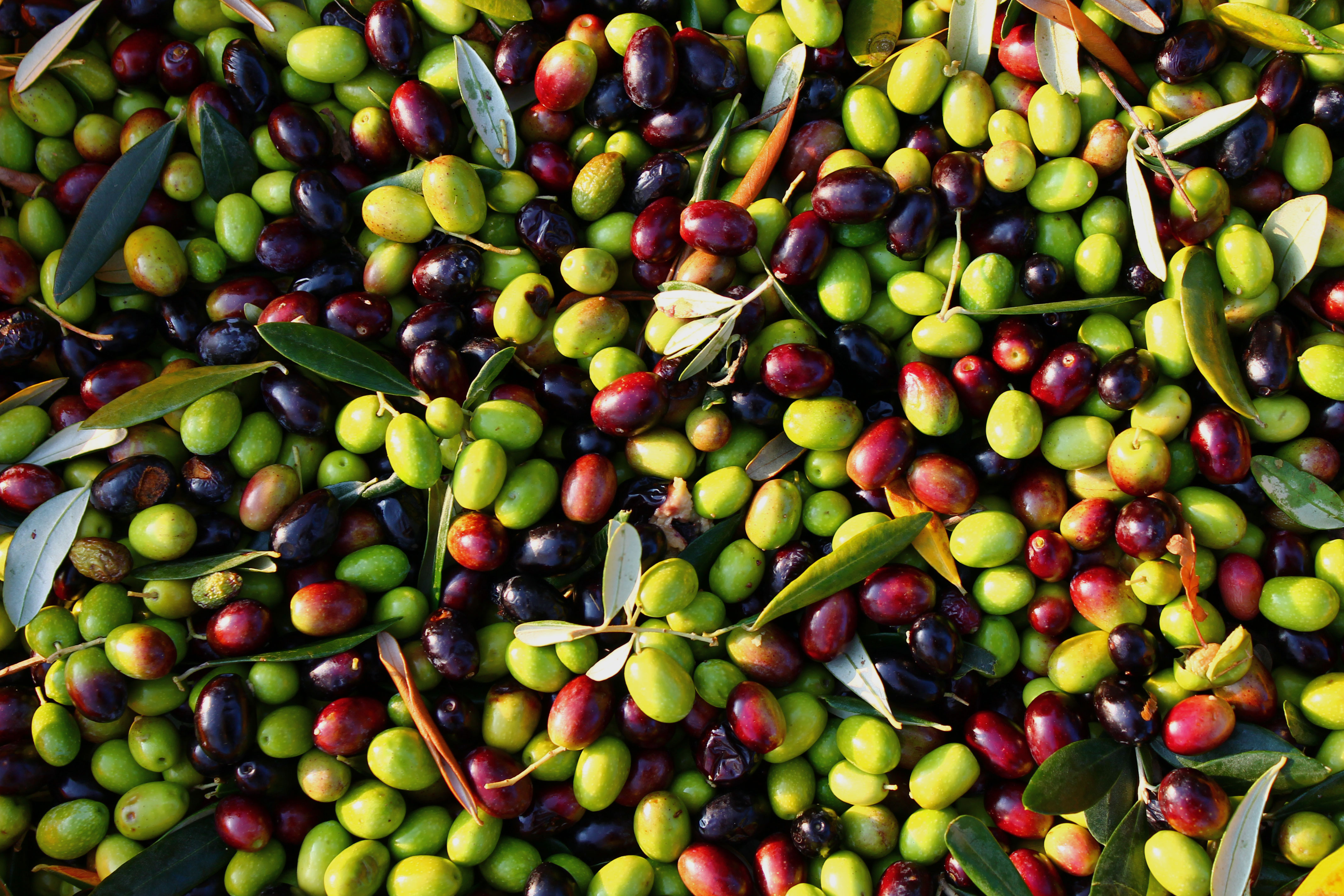 Greek Table Olives – OLYMPIAN GREEN